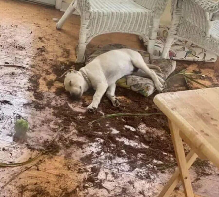 cane esausto ma soddisfatto