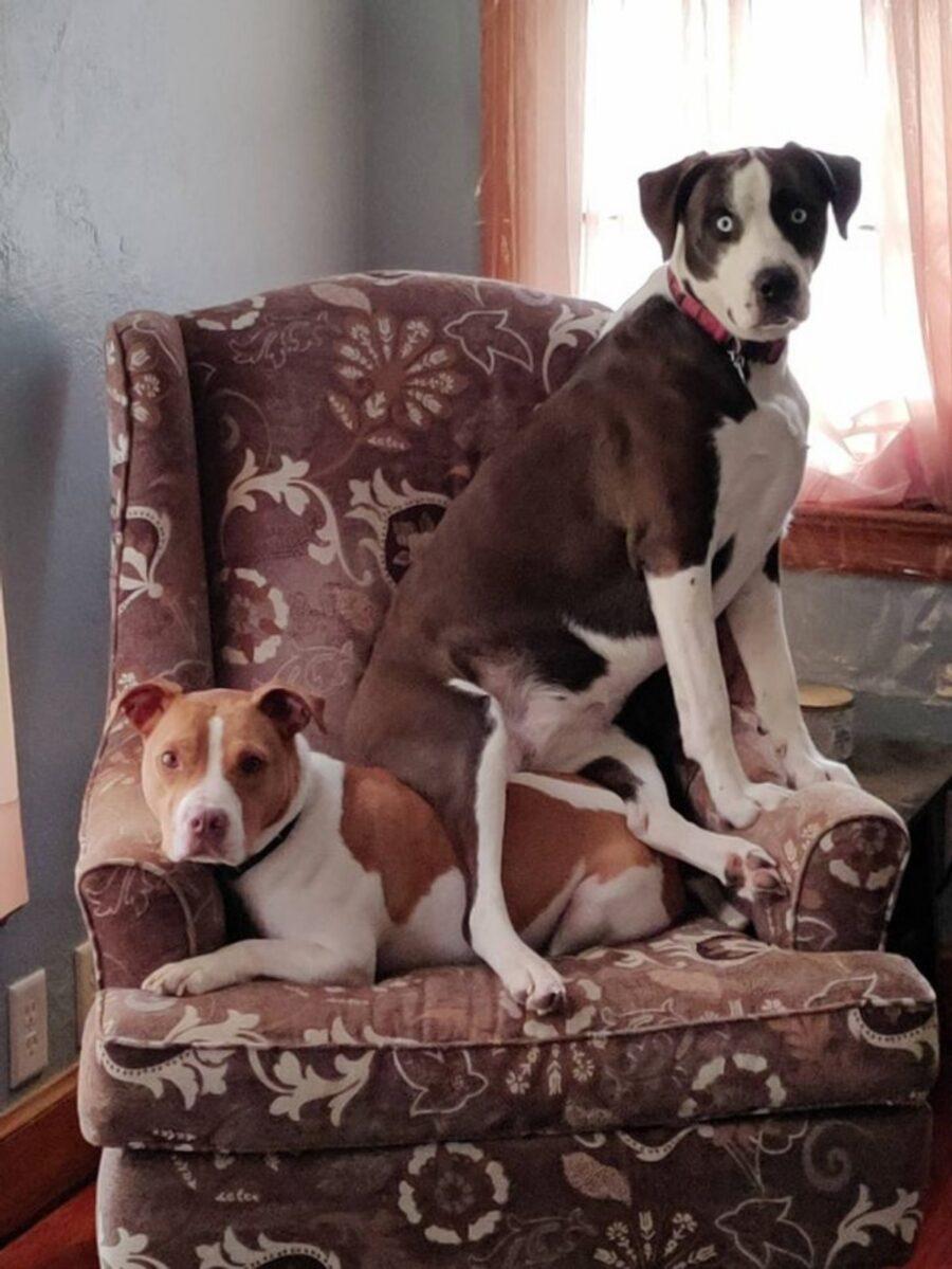 cani poltrona coppia