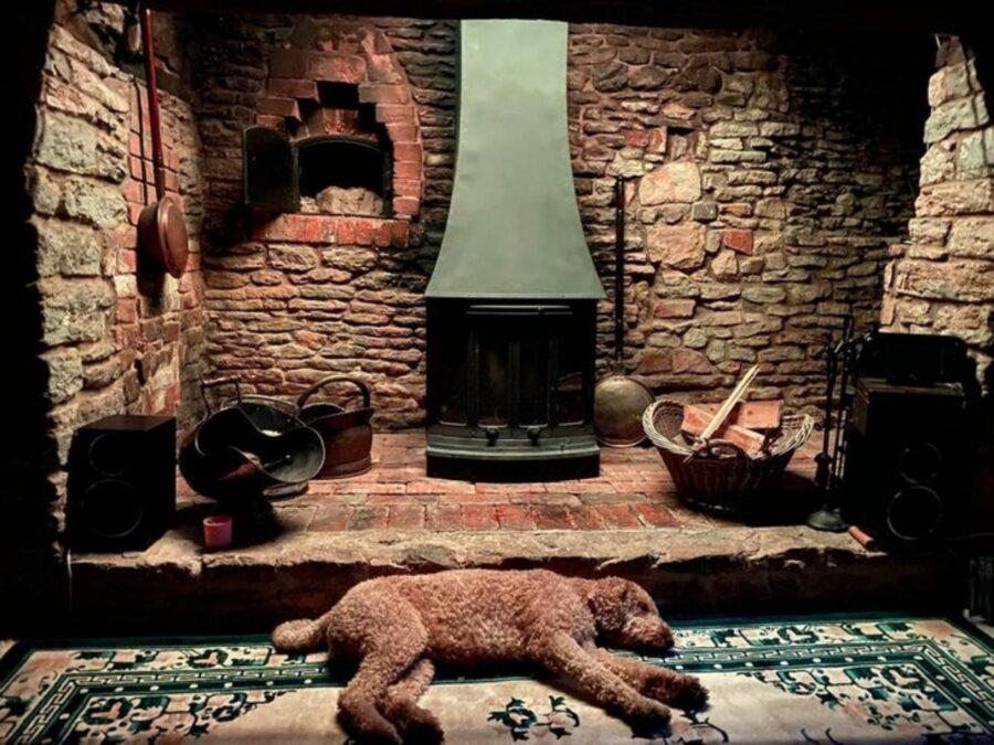 cane barboncino dorme
