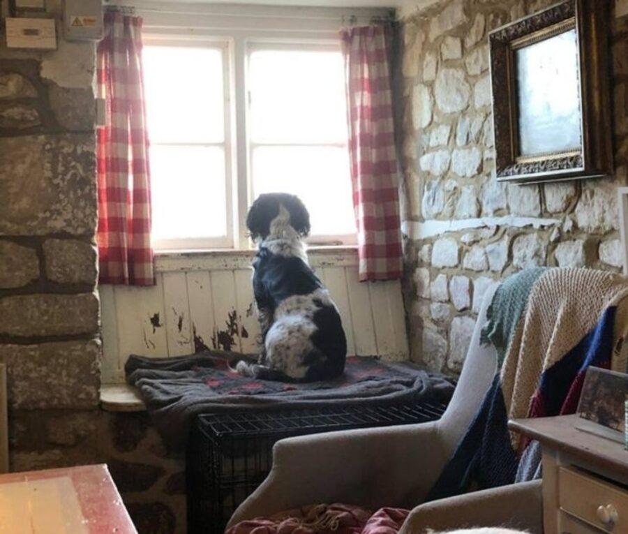 cucciolo finestra guarda