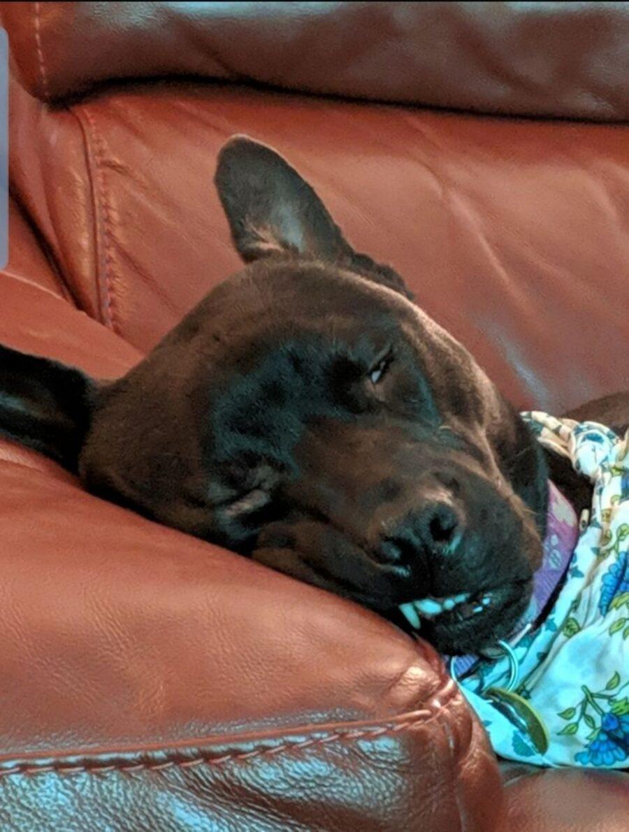 cane riposo sonno