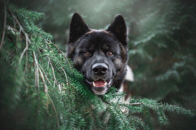 cane natura bosco