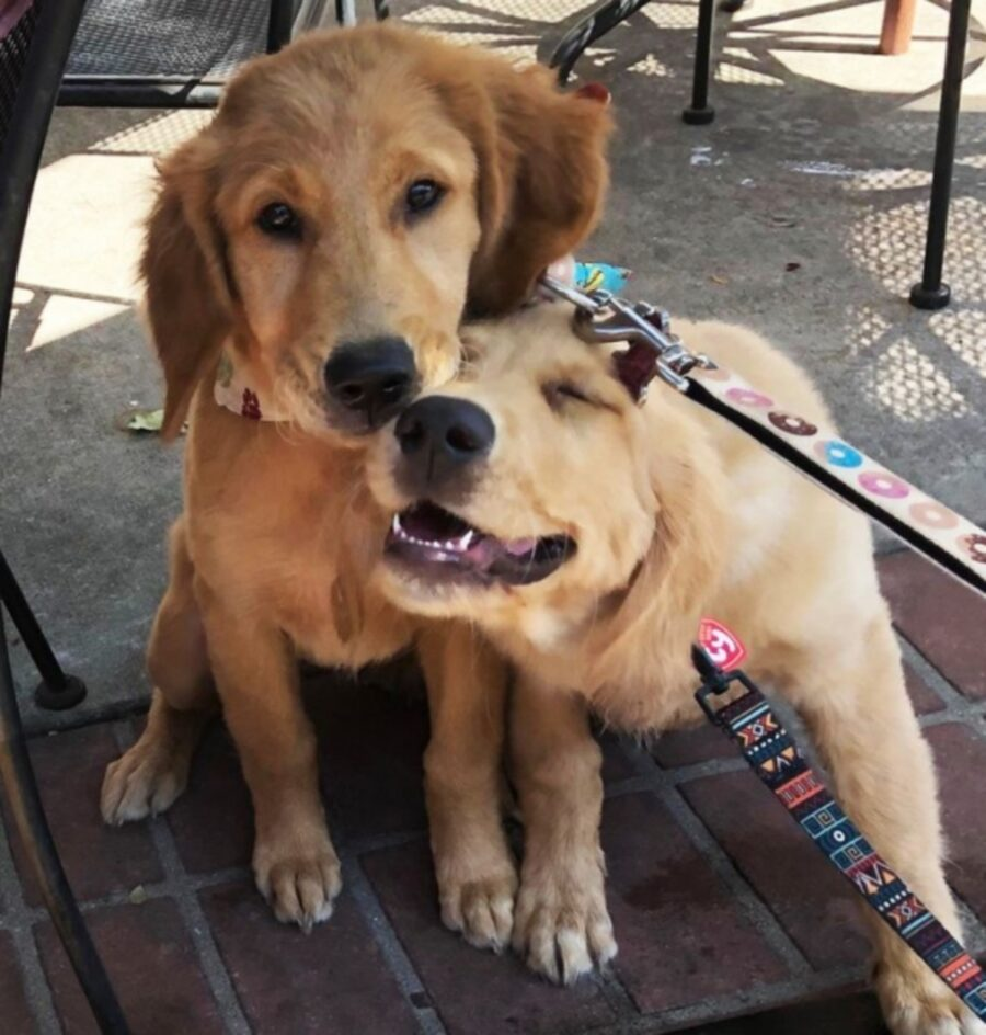 cani insieme adorabili