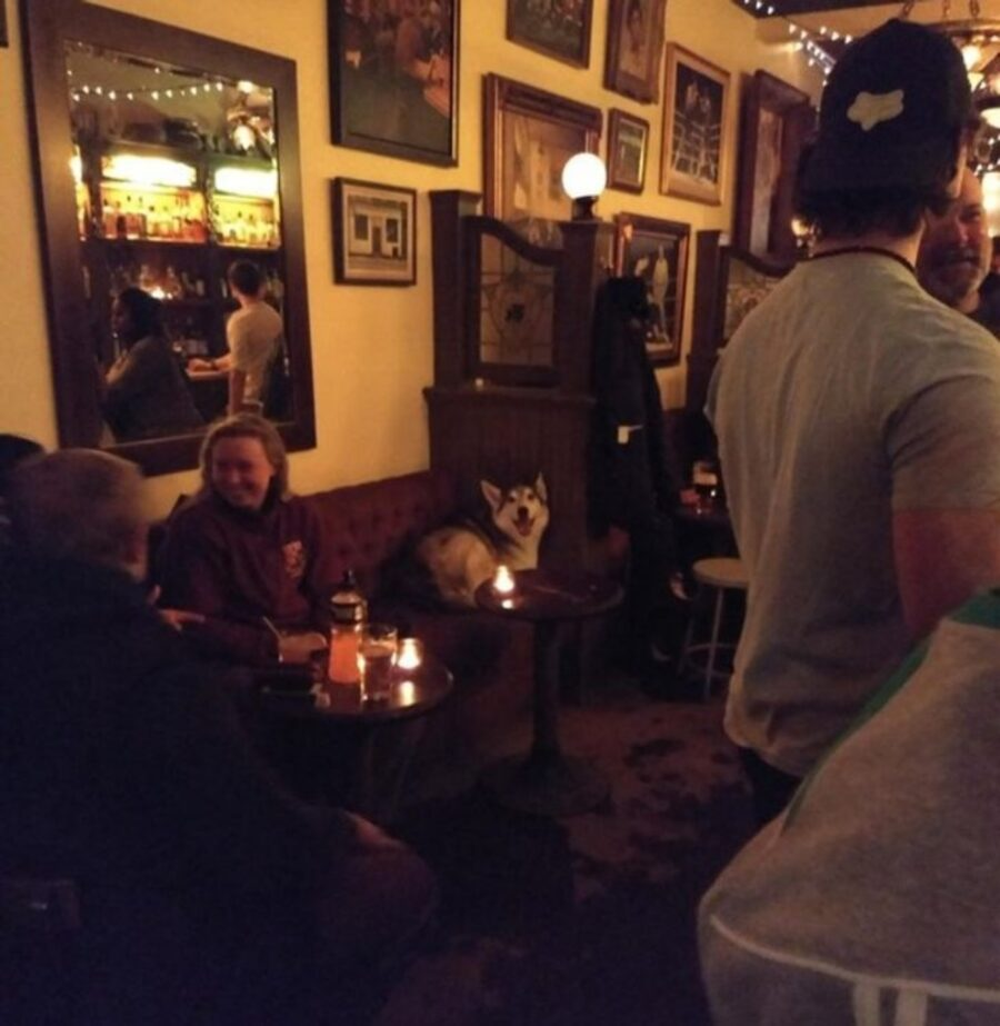 cane ristorante seduto