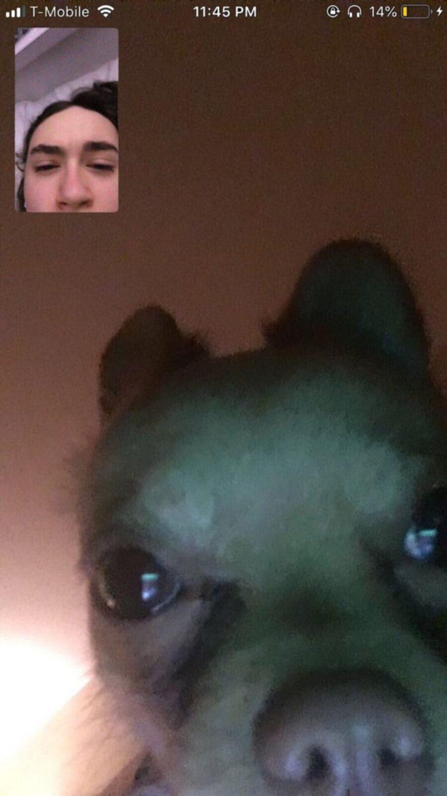 cane videochiamata mamma