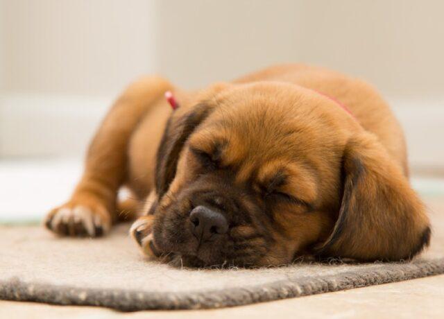 cani che riposano come non mai