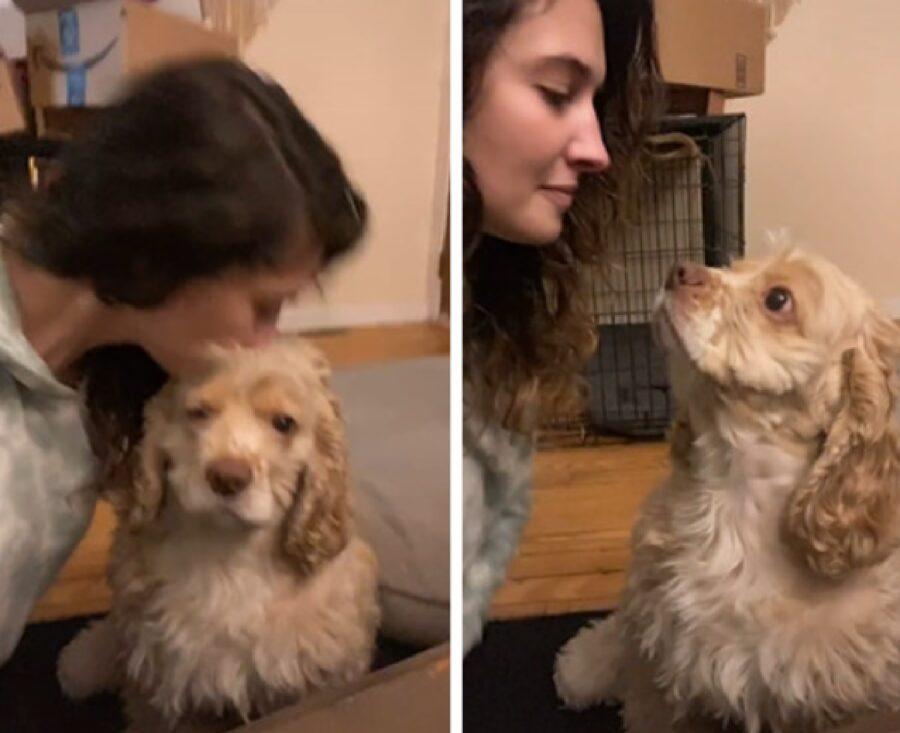 cane rimane impassibile