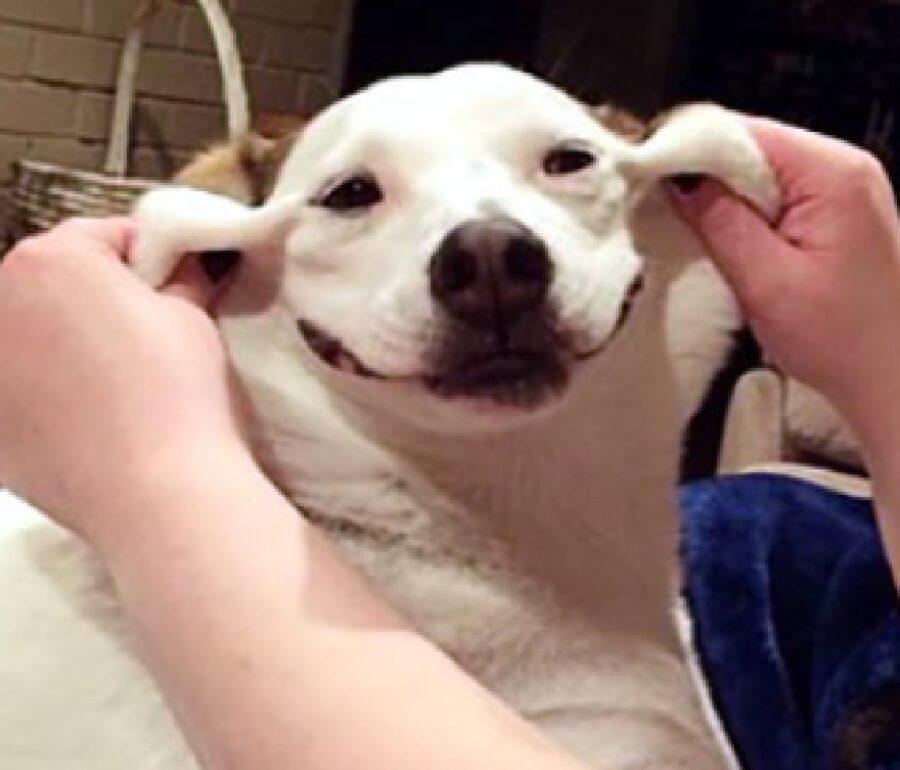 cane sorriso forzato da mani