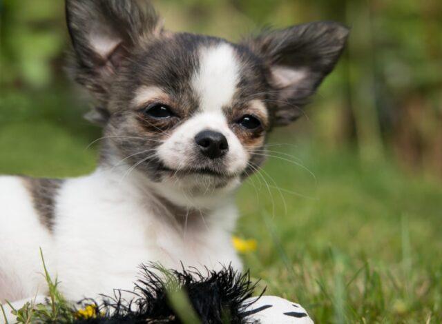 cani simpatici che stanno stupendo il mondo