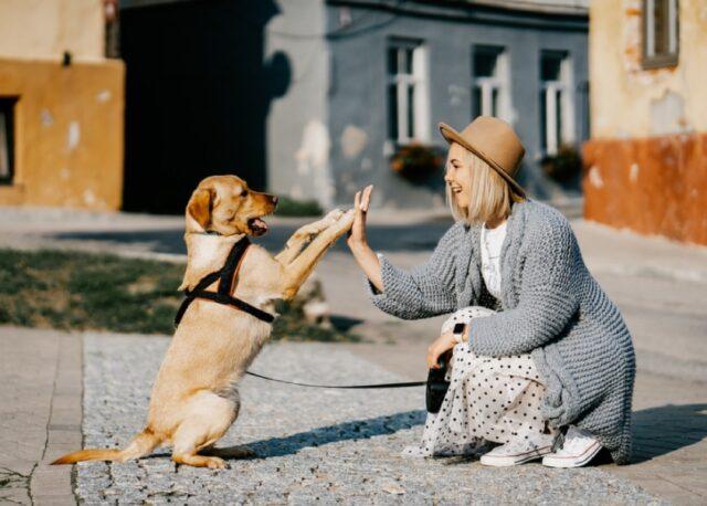 cani in famiglia che rendono migliore vita