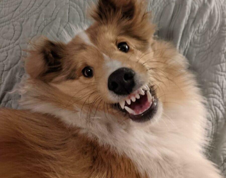 cane sorriso innocente