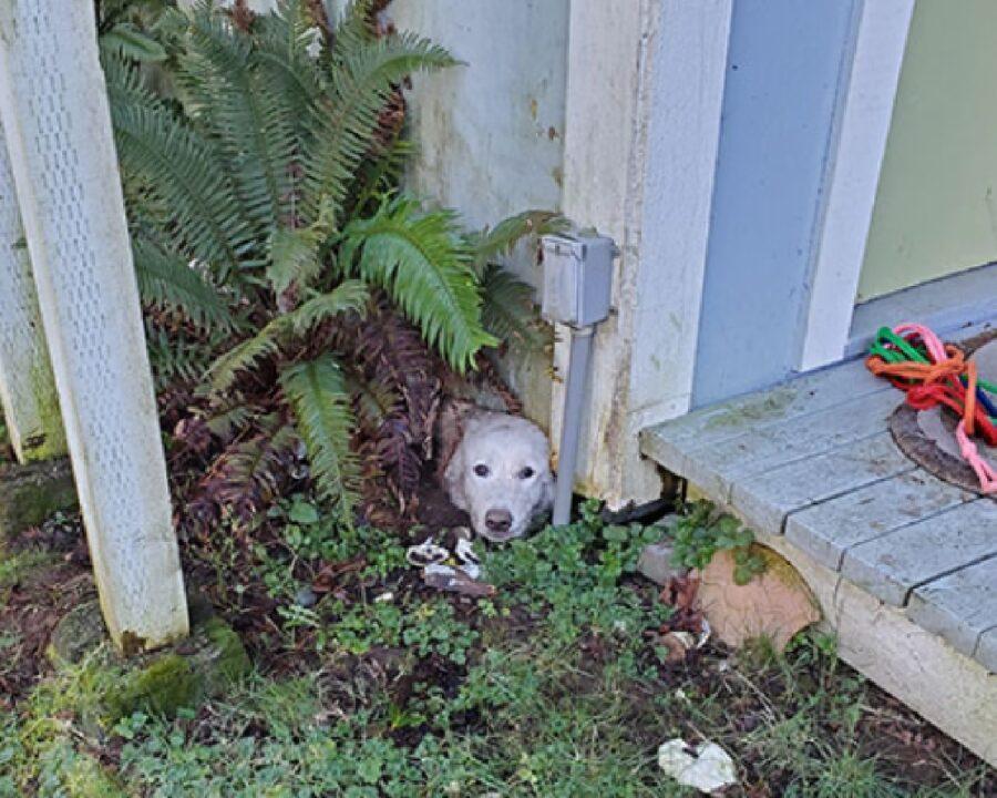 cane sotterrato giardino