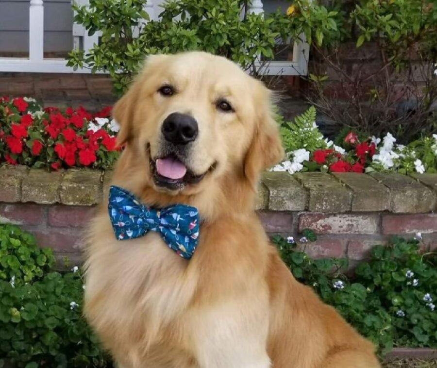 cane con farfallino festa