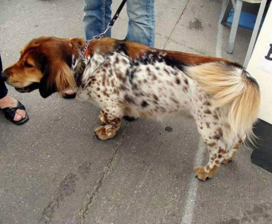 cane colore metà