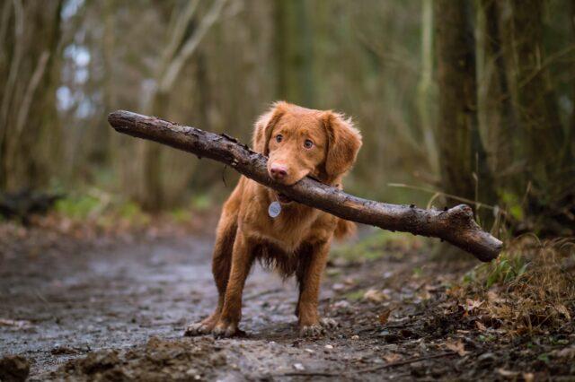 cane cucciolo bastone