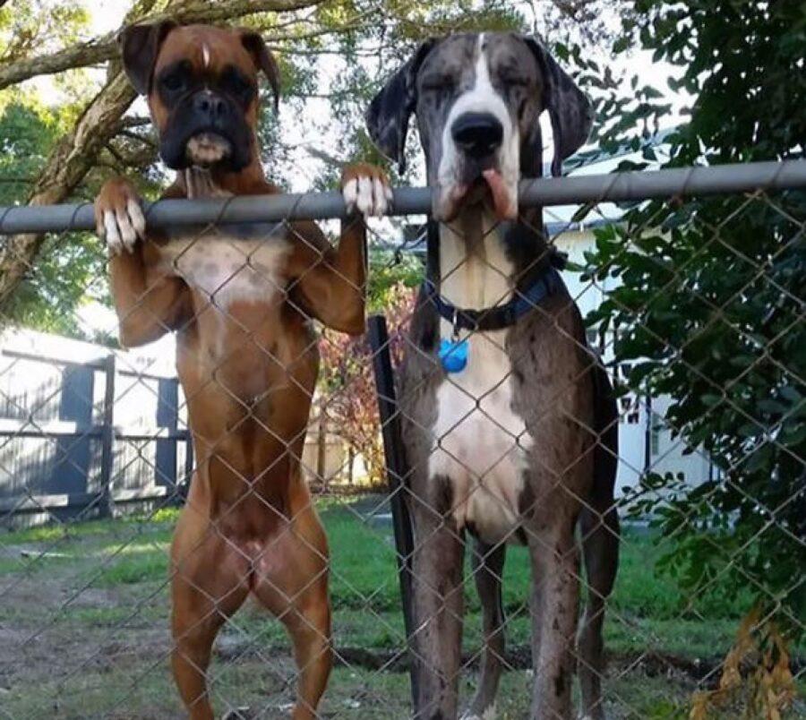 coppia di cani sulla staccionata