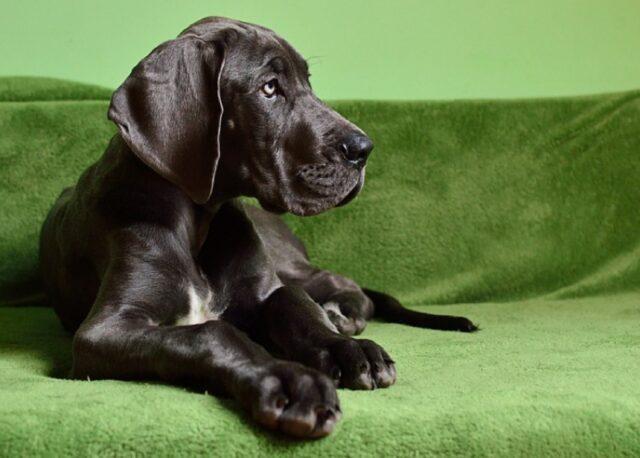 cuccioli che possono essere amorevolmente ingombranti