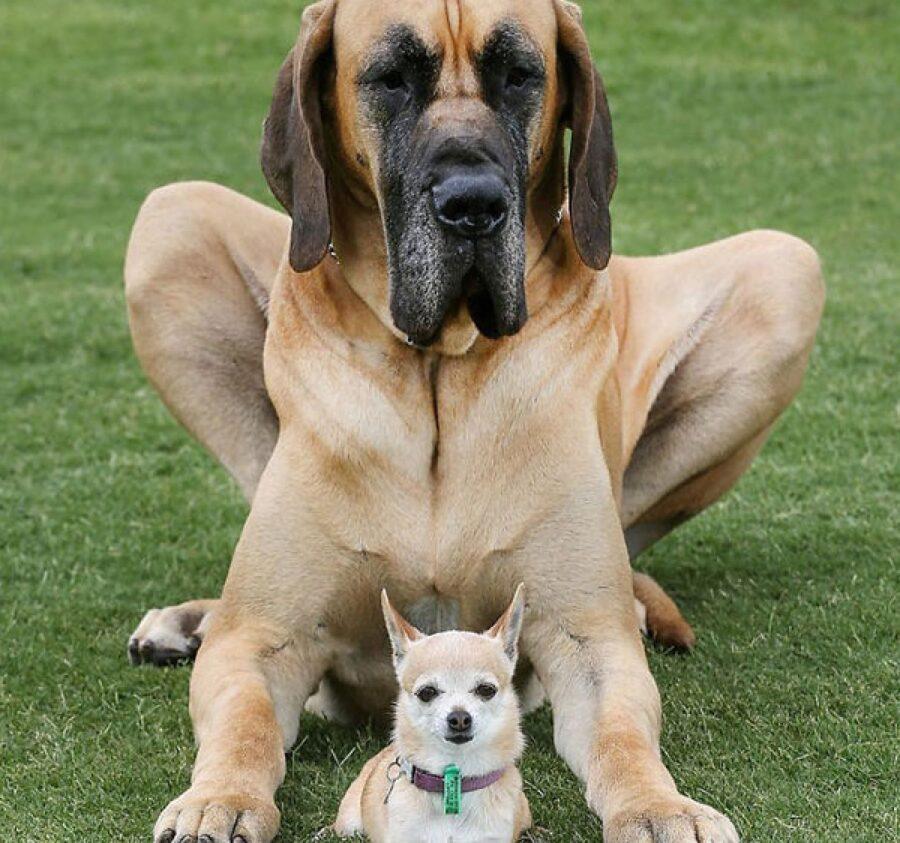cagnolino insieme a cane grande