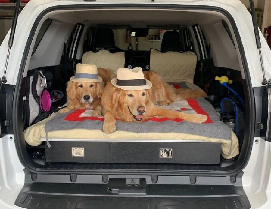 cani dentro auto portabagagli