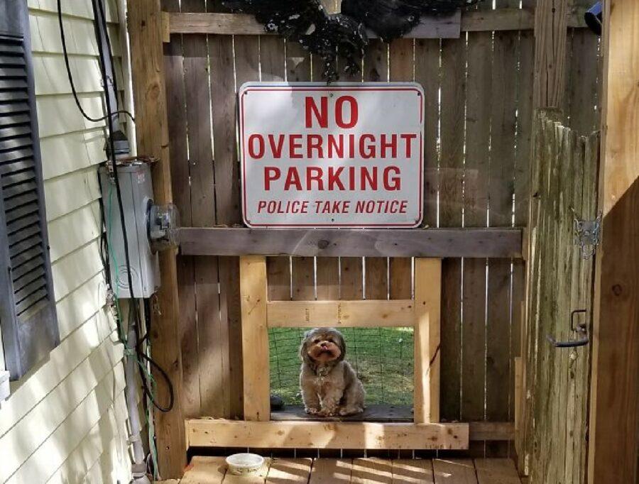 cane sportello di controllo