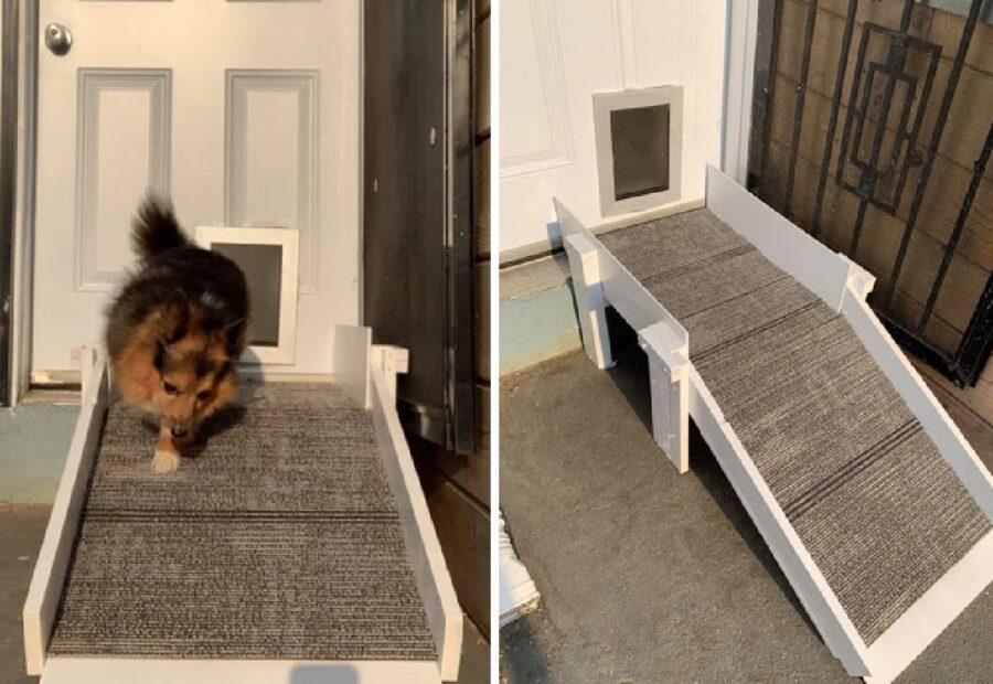 cagnolino rampa porta per cani