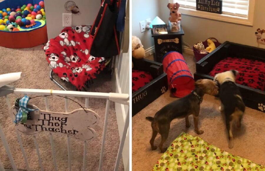 coppia cani stanza dedicata a loro