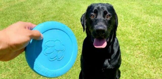 gioco con il fresbee per la prima volta