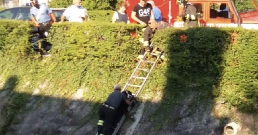 pompiere salva cane con una scala
