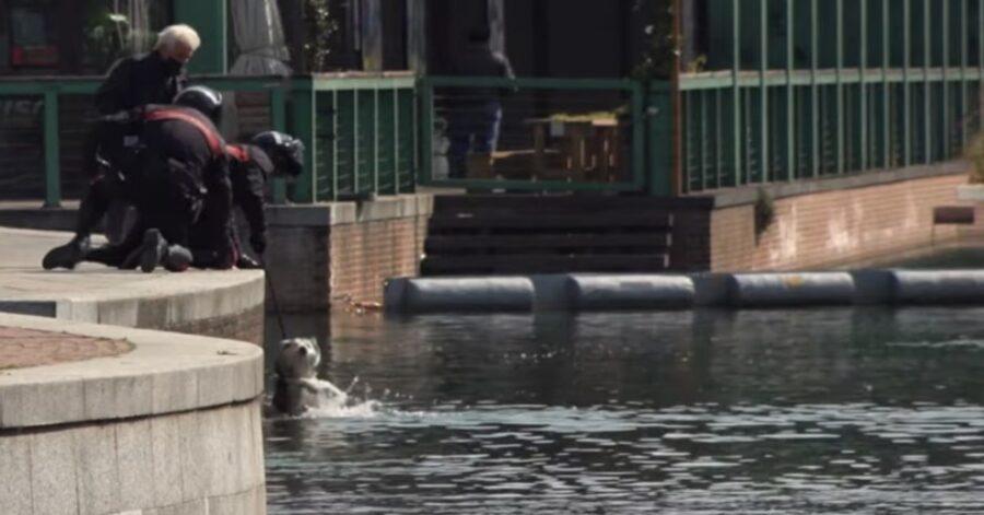 Carabinieri salvano cane caduto in acqua
