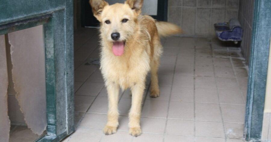 cane dal pelo marrone chiaro