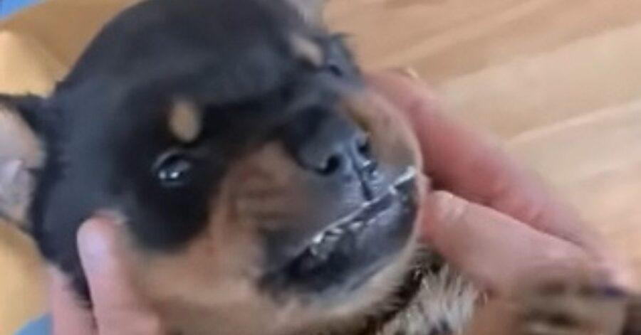 simpatico cagnolino fa le smorfie