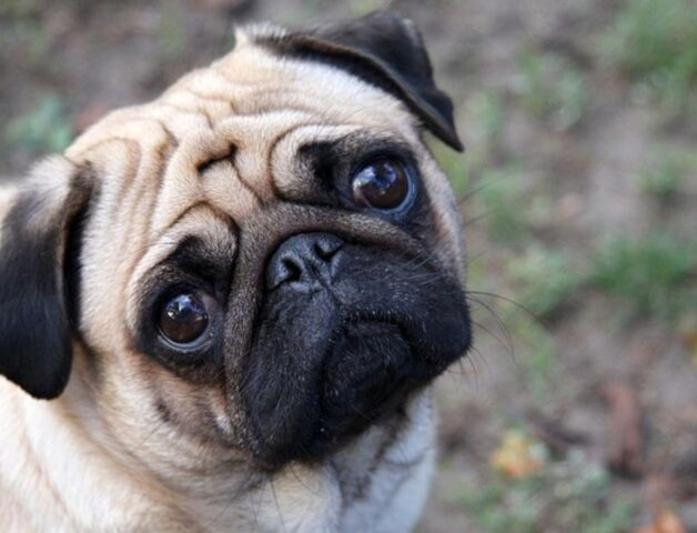 cucciolotto che osserva