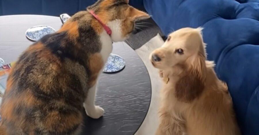 cane e gatto si divertono