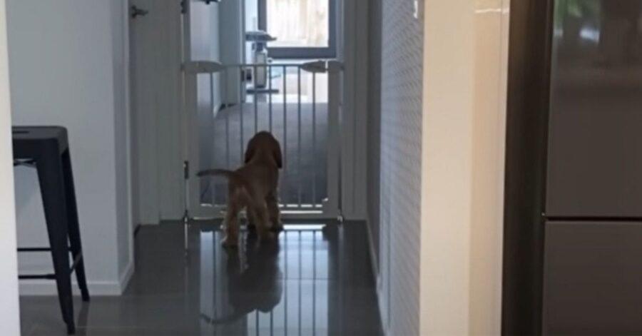 cucciolotto in casa