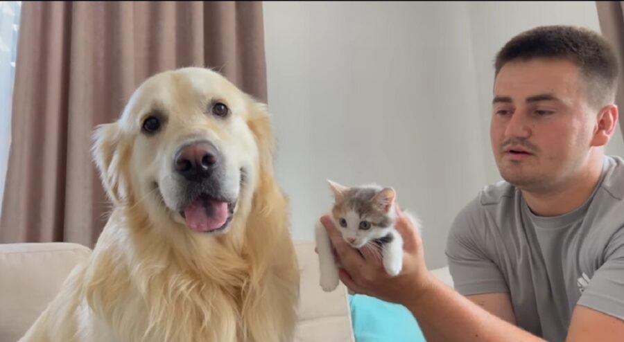 cane e gatto primo incontro