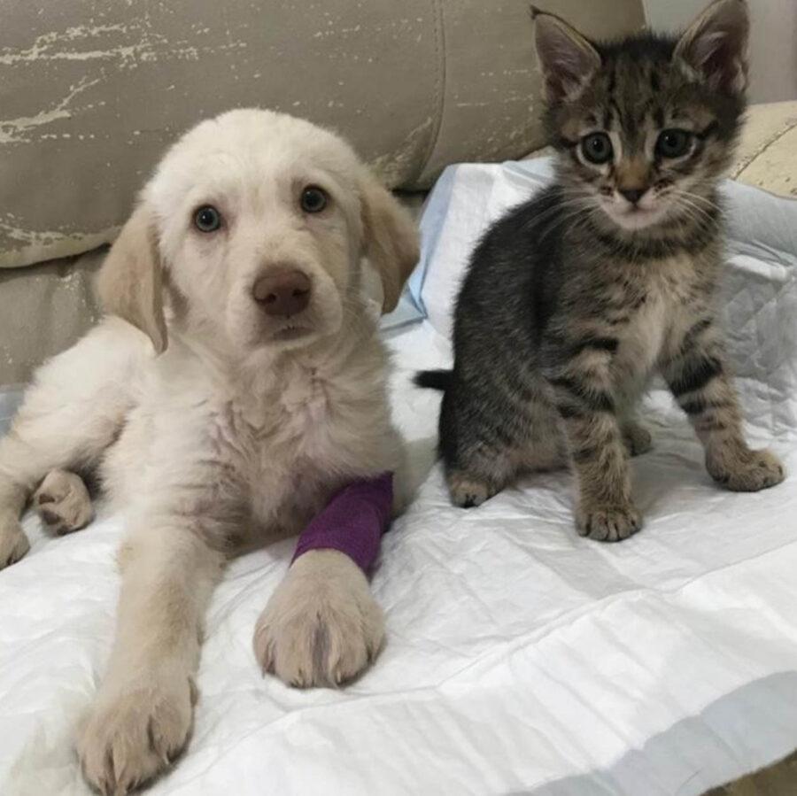 cagnolino e gattino vicini