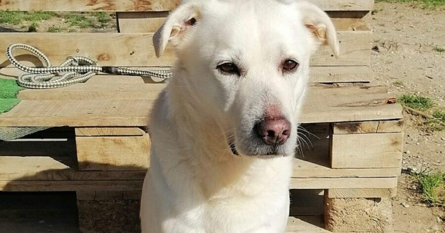cagnolino bianco con il muso triste