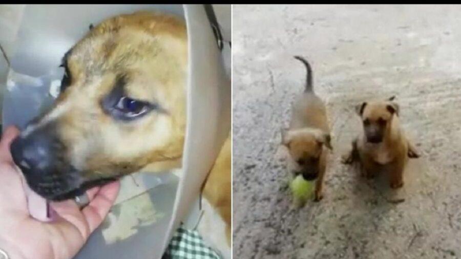il cagnolino è guarito