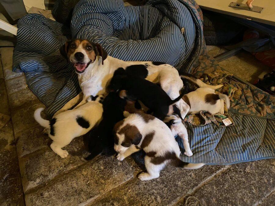 mamma, cuccioli e papà cercano casa