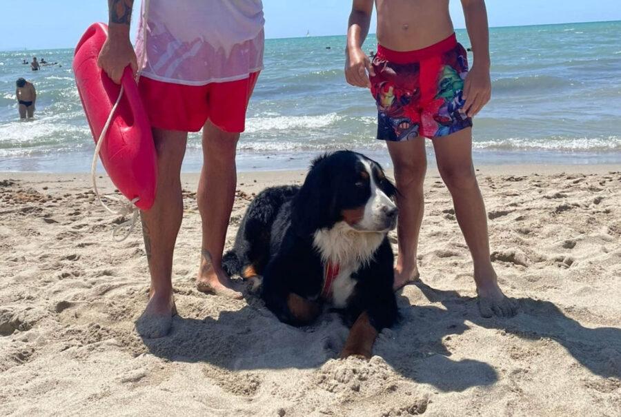 Bovaro del bernese in spiaggia