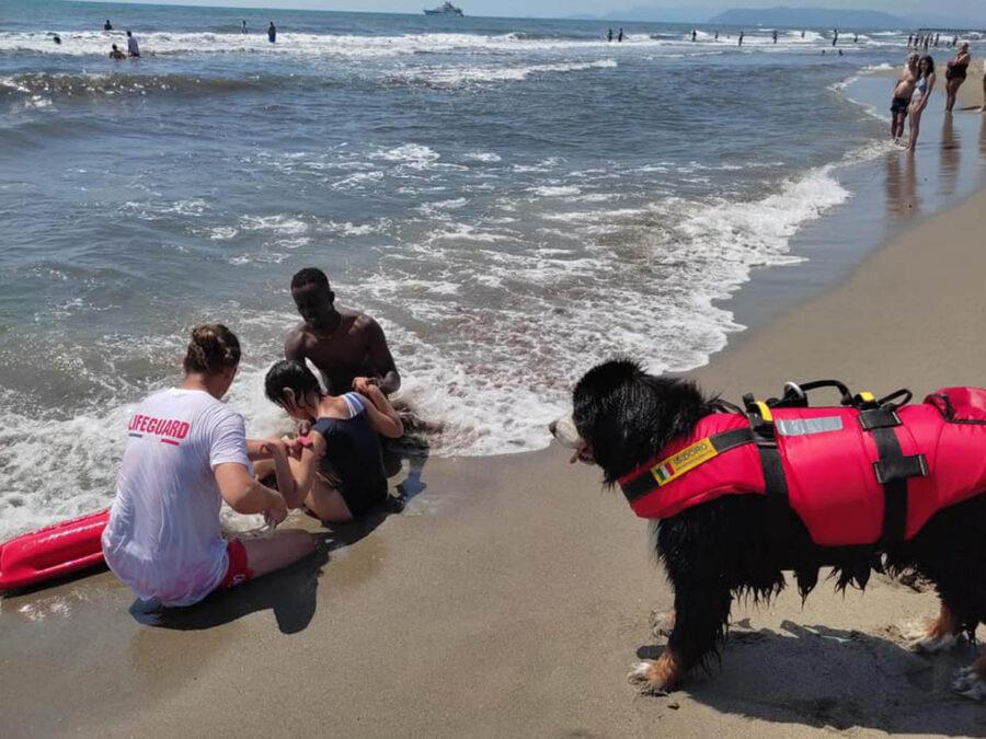cane salva bambino in mare