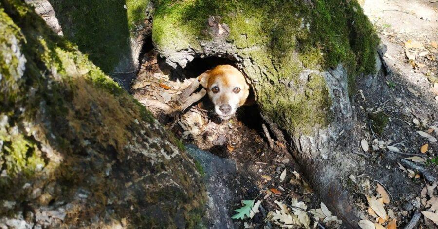cagnolino nascosto in un albero