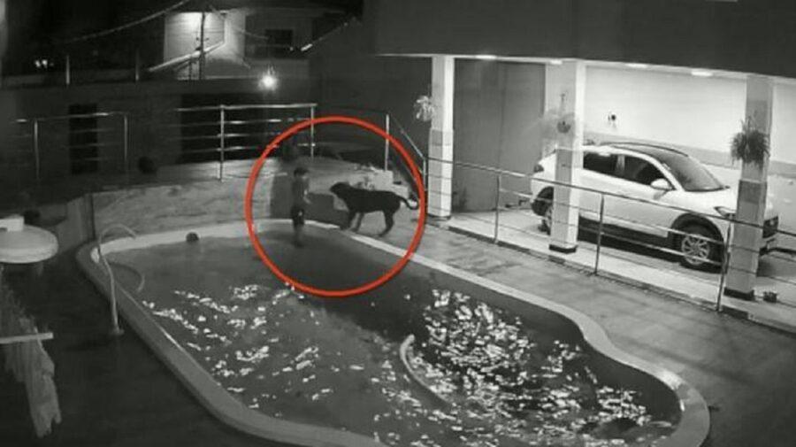 un ragazzo salva il rottweiler