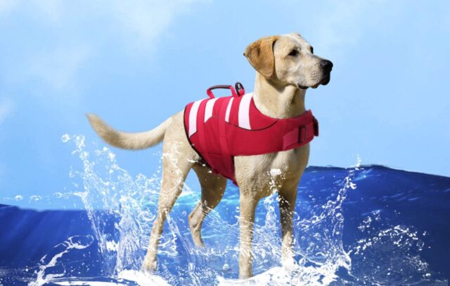 cane con giubbotto salvagente