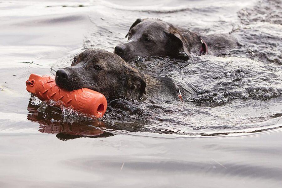 cane che nuota con gioco in bocca
