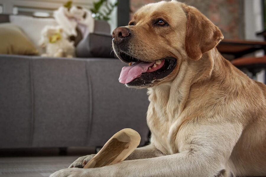 cane con bastone masticatile