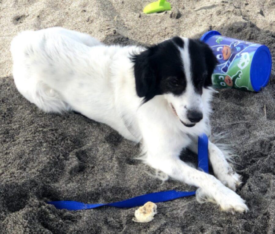 cane sabbia gioco spiaggia