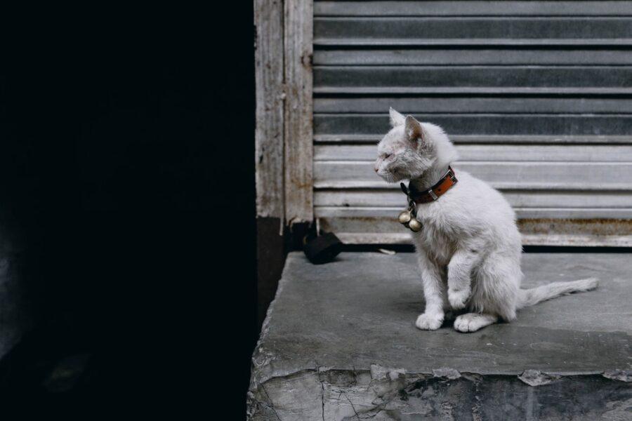 gatto randagio spaesato
