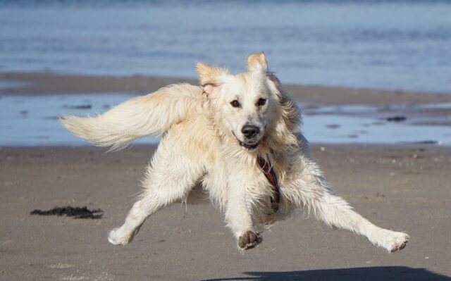 cane salta sulla sabbia
