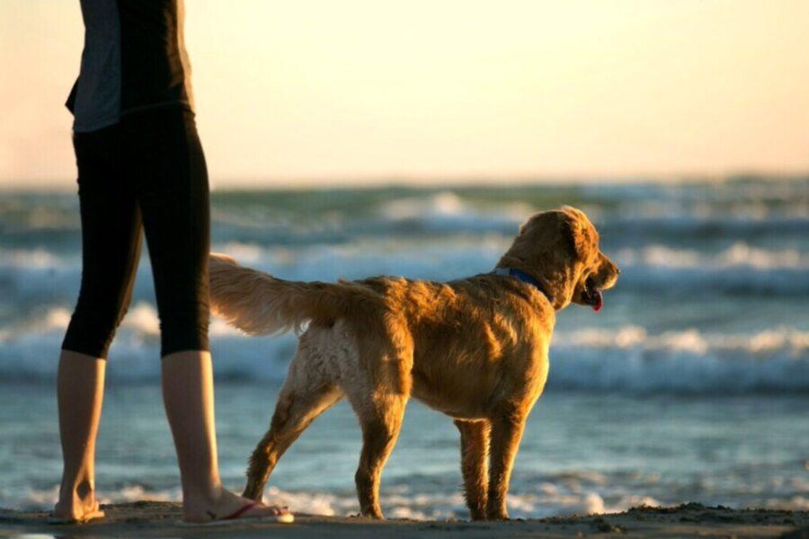 cane corre al mare